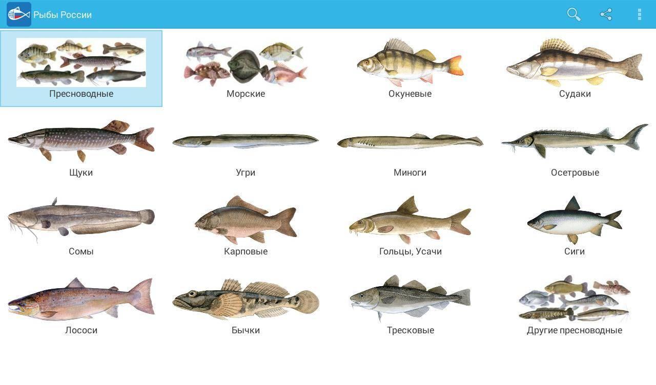 Самые большие речные рыбы в россии – список, размеры, фото и видео