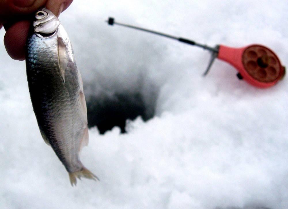 Правильная ловля уклейки на поплавочную удочку