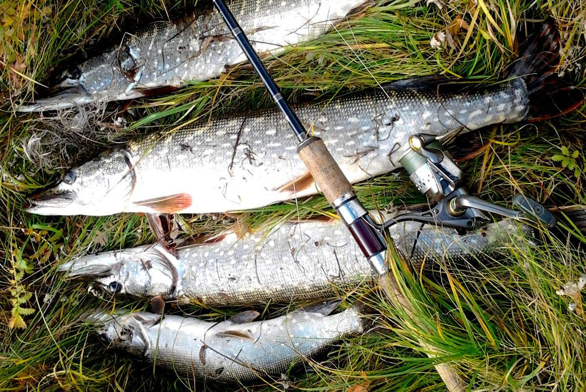 Ловля щуки на воблер - какой лучше выбрать? особенности и техника ловли