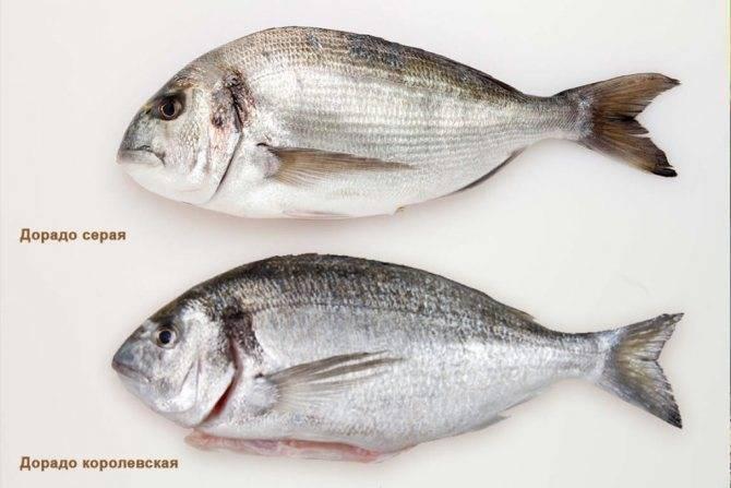 Рыбный день: топ-10 от шеф-повара игоря корнева
