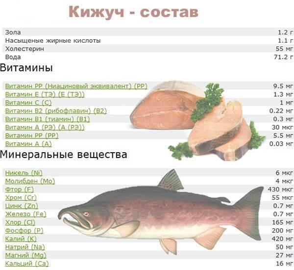 Калорийность рыбы путассу на 100 грамм, польза и вред