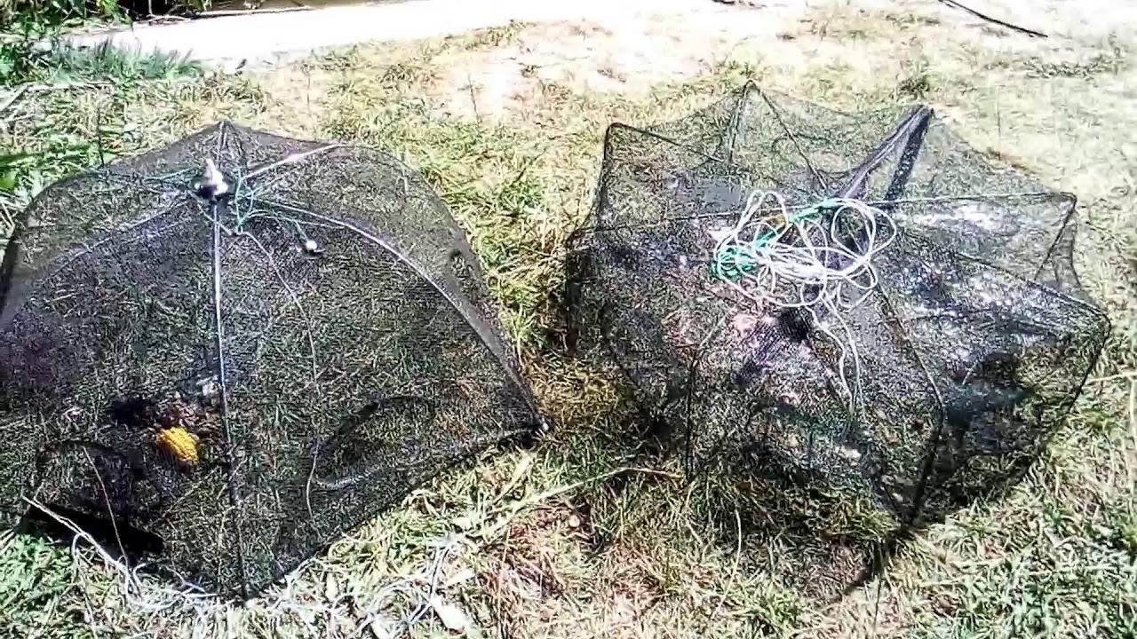 Раки и ловля раков