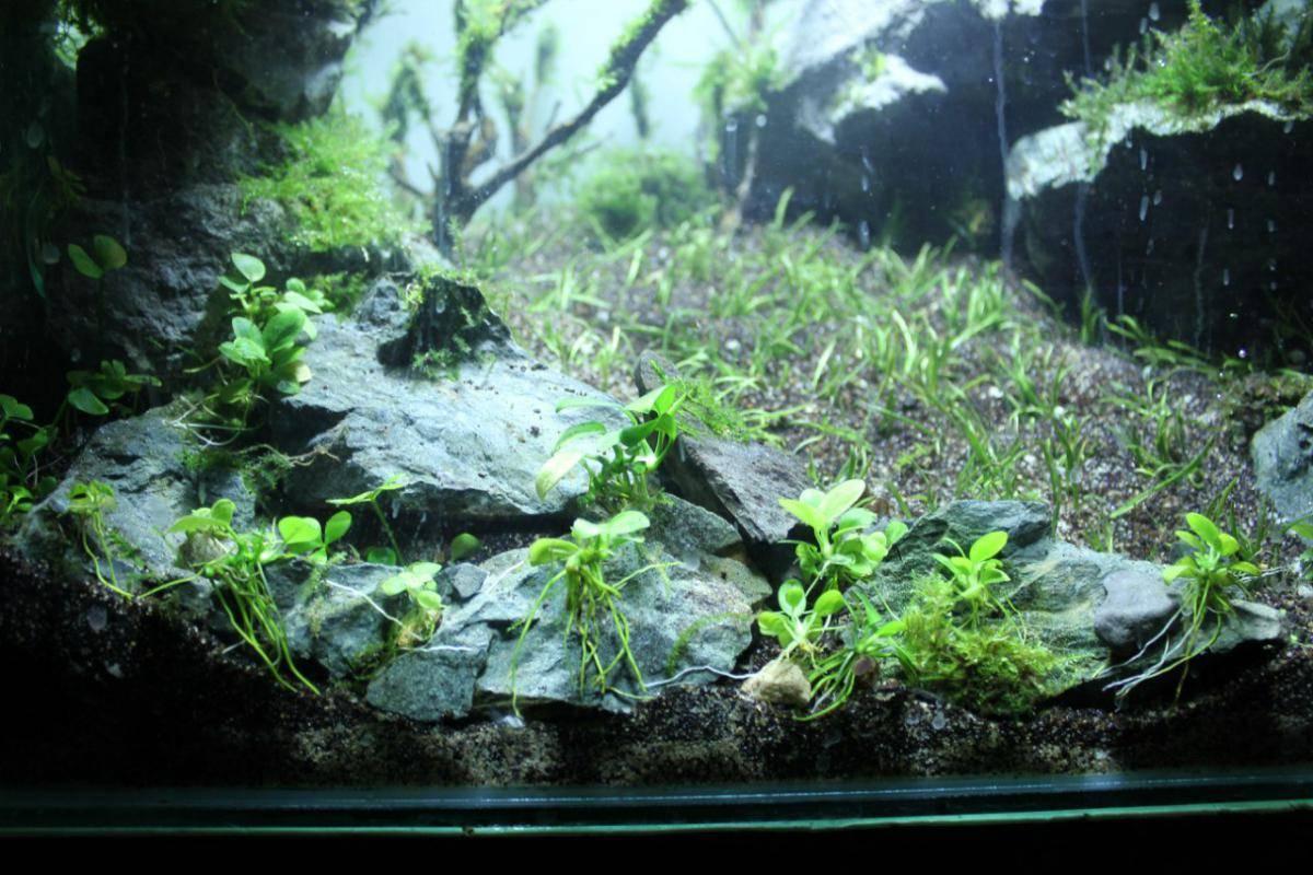 Узв: выращивание рыбы в мини-установках замкнутого водоснабжения