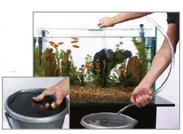 Как чистить аквариум в домашних условиях: фото и видео как чистить аквариум в домашних условиях: фото и видео
