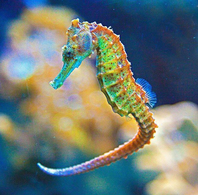 Обитатели аквариума — виды и советы по выбору
