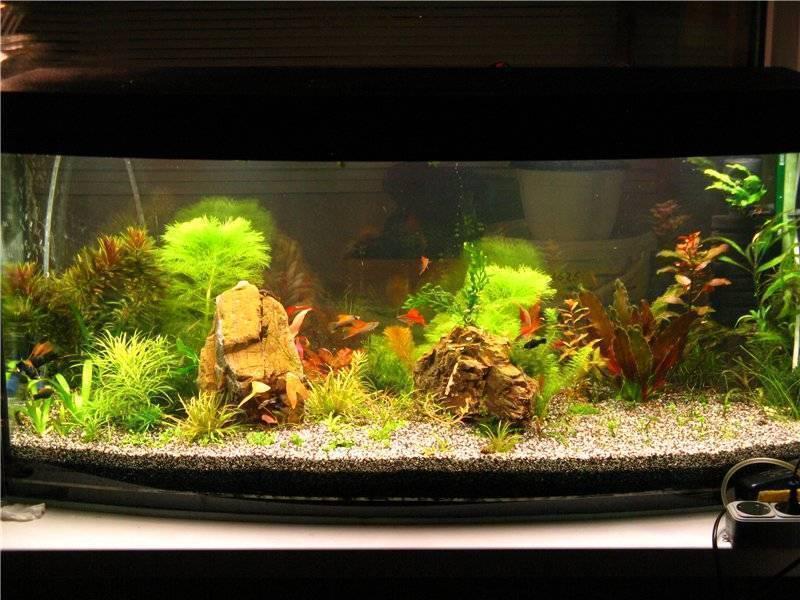 Быстрорастущие растения для аквариума: описание и правила ухода