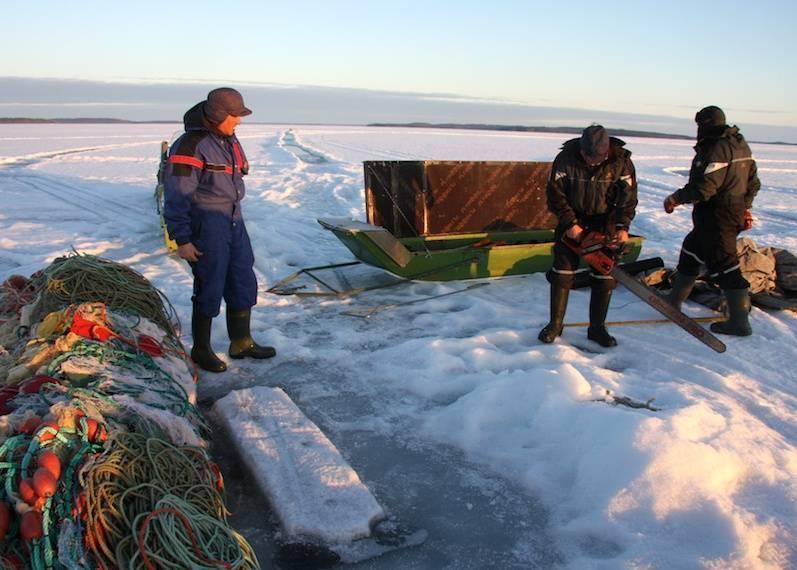 Рыбалка в республике коми: как рыбачить в тайге? популярные места для рыбалки, запреты