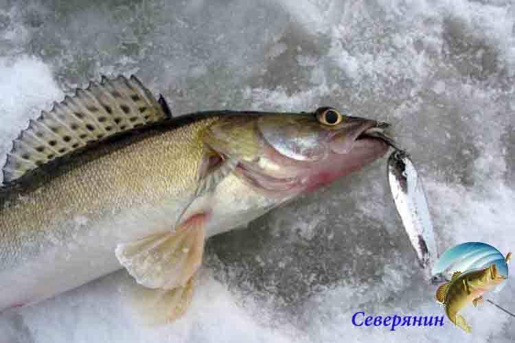 Рыбалка на окуня по первому льду на блесну, балансир и мормышку