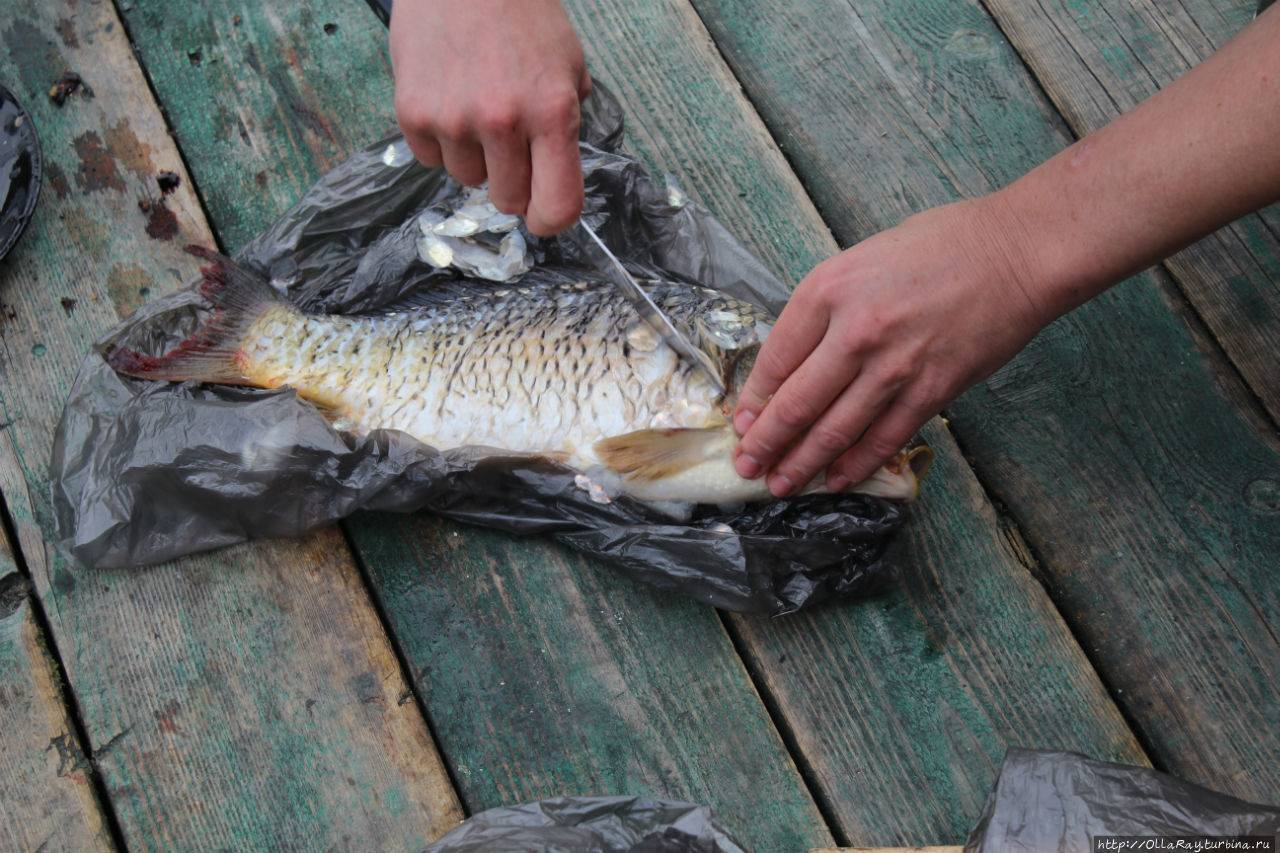 Рыбалка в сергиево-посадском районе (городской округ). форум