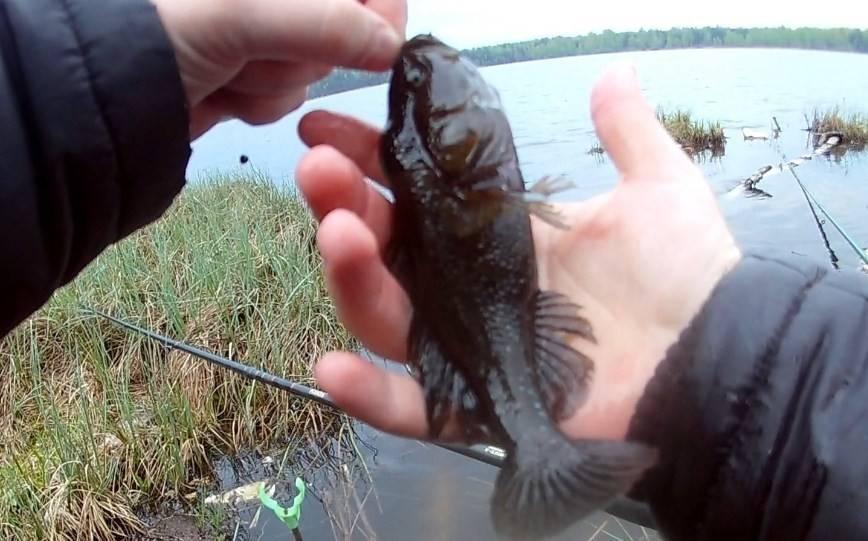 Как ловить ротана зимой: особенности зимней рыбалки