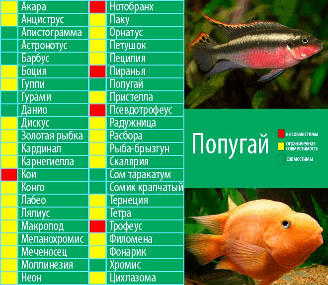 Золотая рыбка в аквариуме - уход и содержание, размножение