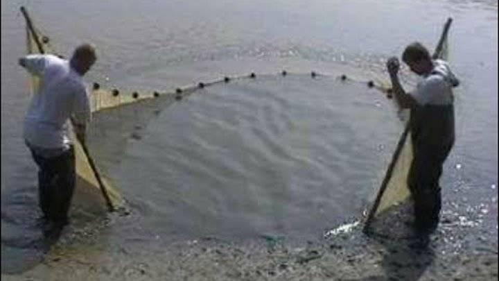 Какой бредень выбрать для летней рыбалки?