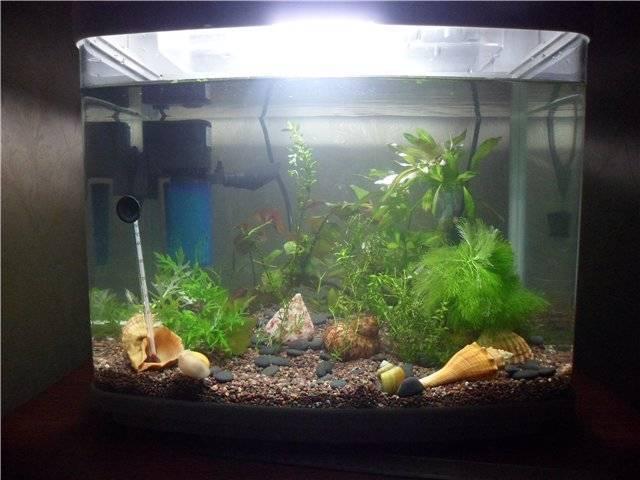 Нормальная температура воды в аквариуме для рыбок