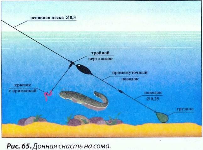 Как ловить на донку: на что ловят, азы донной рыбалки для новичков