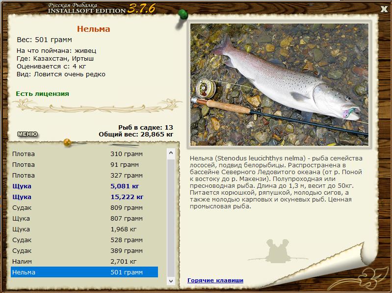 Блесна на нельму: особенности ловли на спиннинг, подбор оснастки