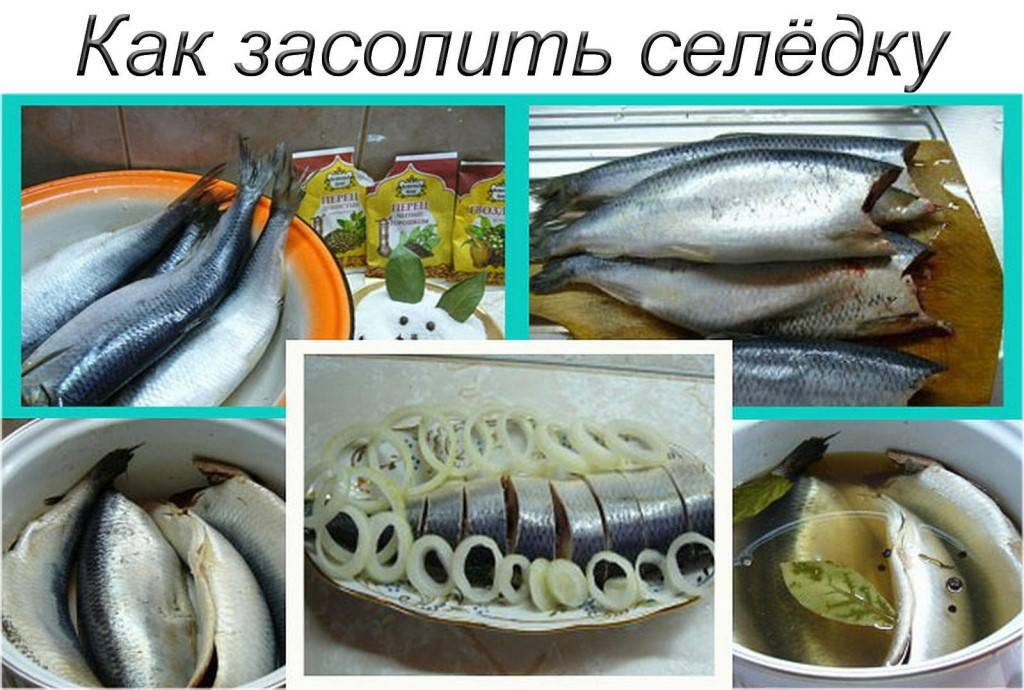 Как солить рыбу: засолка в домашних условиях, способы засолить для вяления