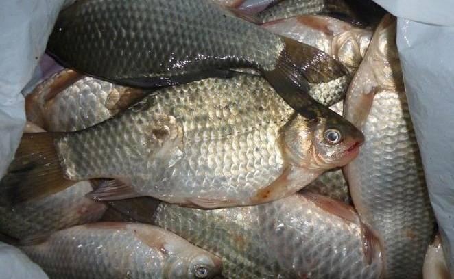 Рыбалка в курганской области: лучшие места на карте топ-10