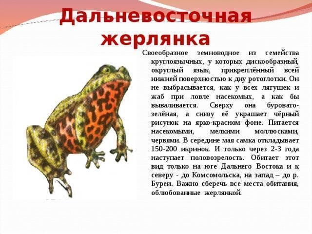 Травяная лягушка | мир животных и растений