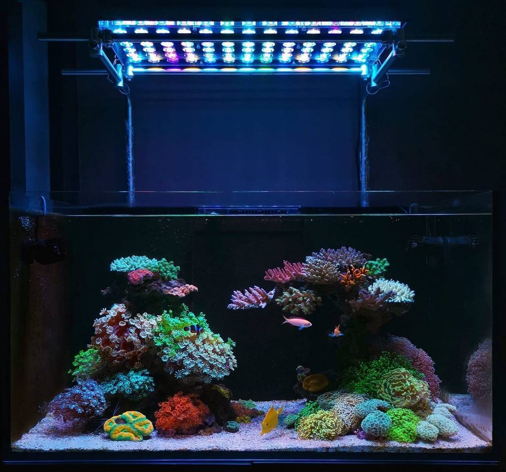 Как правильно выбрать led светильник для аквариума: лампа, лента или прожектор