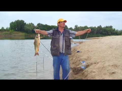 Рыбалка на дону: видео, какая рыба ловится в августе, сентябре и другие месяцы