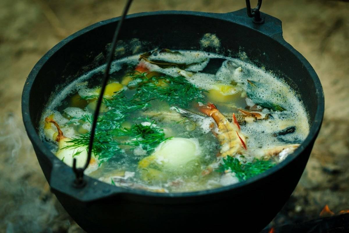 Уха из карпа в домашних условиях: пошаговые рецепты с фото