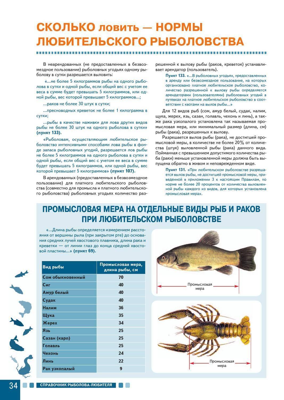 Правила рыболовства по закону: в 2019 году: где, как и чем можно рыбачить