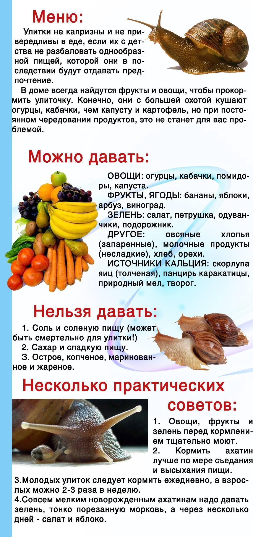 Что едят раки в домашних условиях (чем питаются и что кушают, кормление речных раков, питание): виды кормов, советы, кормушки, молодняк, советы