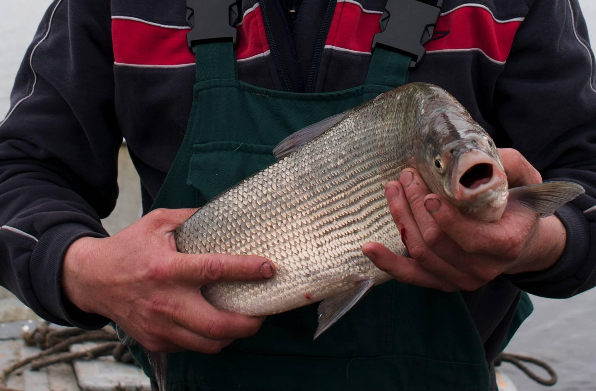 Рыбалка в шегарском районе