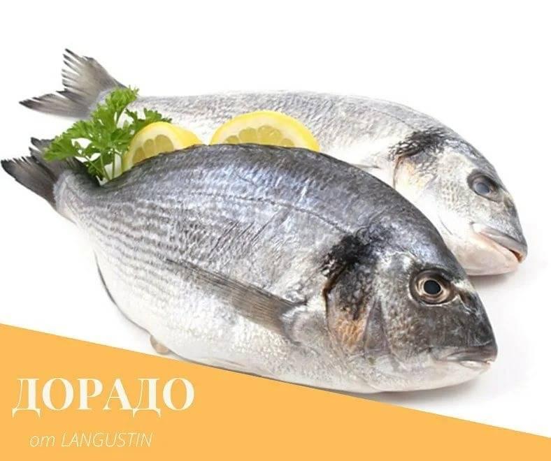 Сибас: калорийность, содержание бжу, польза и вред рыбы для организма человека