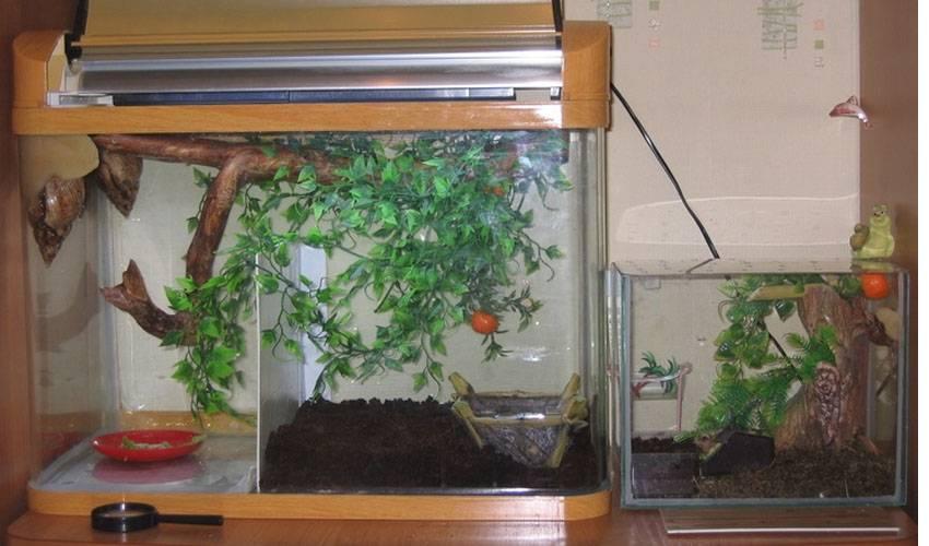 Мох сфагнум: фото, где растет и для чего используют. чем полезен мох сфагнум для дачника