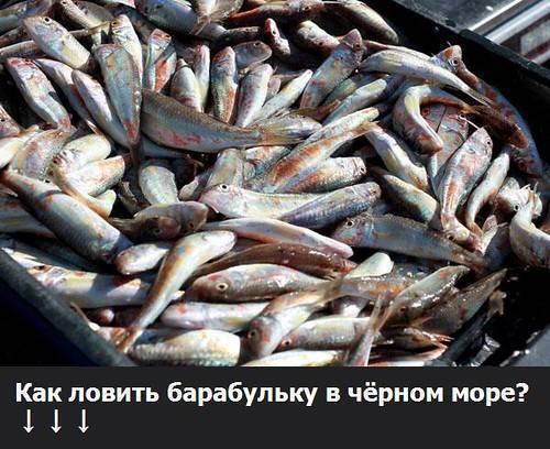 Барабулька, обитание,способы ловли и приготовления   рыбалка