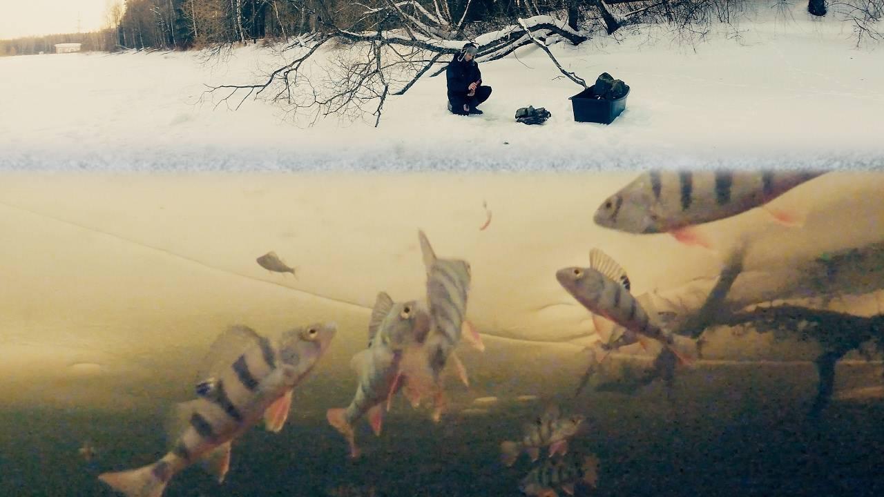 Зимняя плотва — нюансы и тонкости ловли