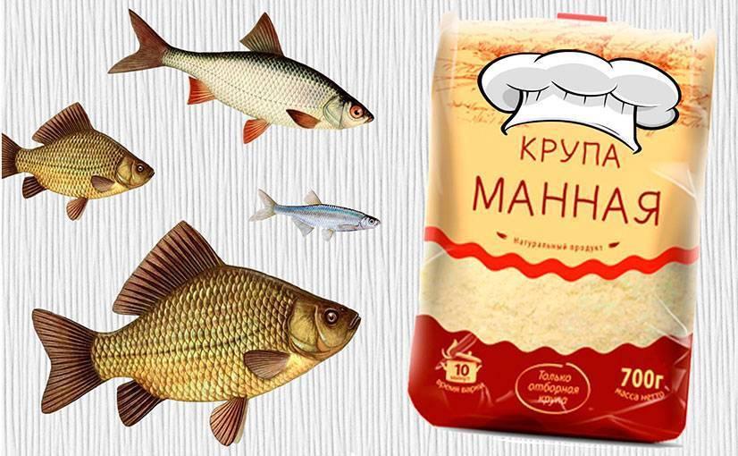 """Тесто для рыбалки: """"обрыбленные"""" рецепты приготовления"""