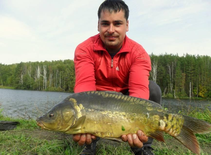 Где и какая рыба клюет ульяновск - красивый ульяновск  - каталог статей - ulianovsk