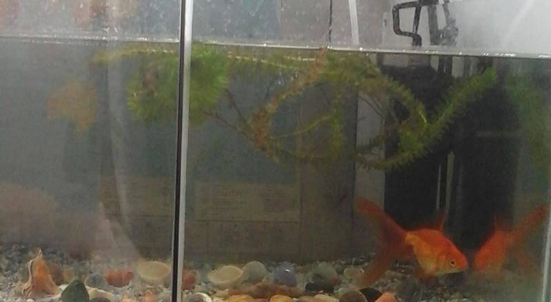 Почему умирают рыбки в аквариуме почему умирают рыбки в аквариуме