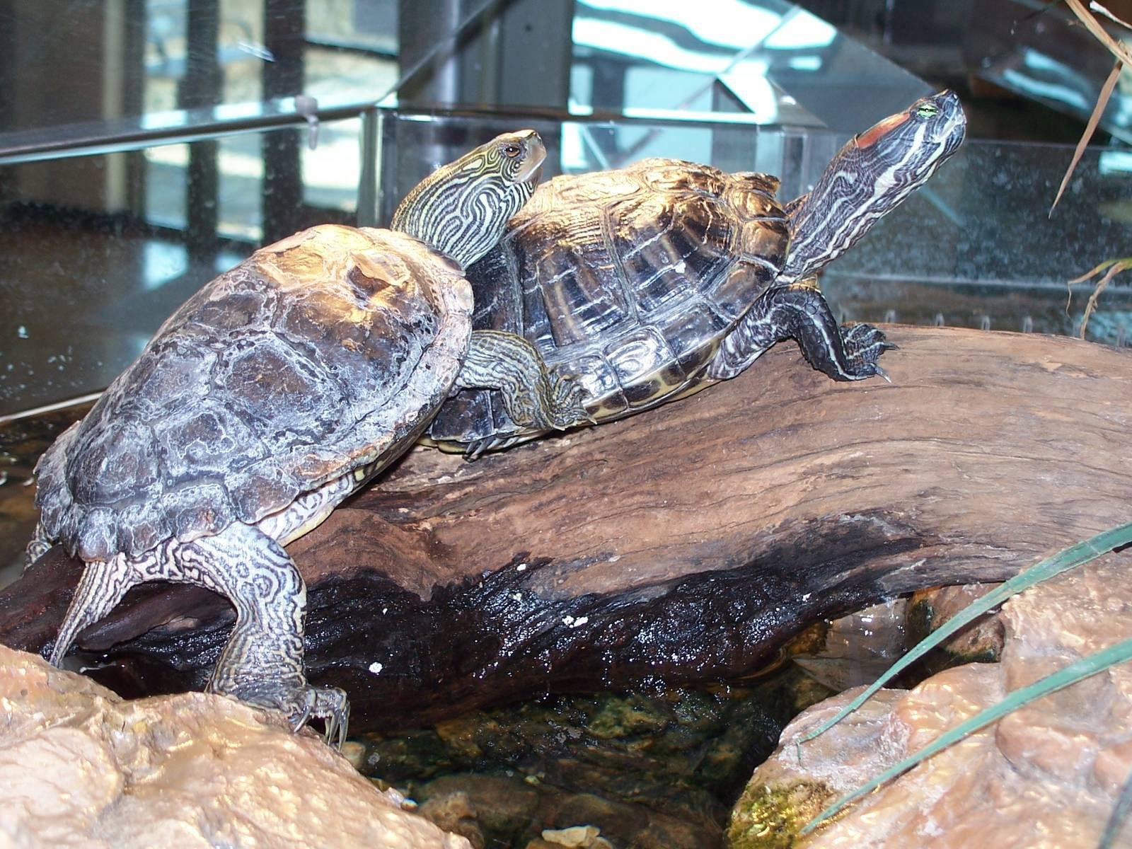 Черепахи водные, морские и сухопутные: как ухаживать за ними в домашних условиях