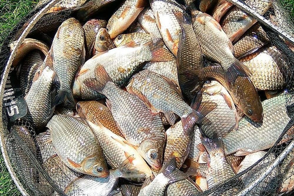 Любители зимней рыбалки в петропавловске поделились опытом и уловом