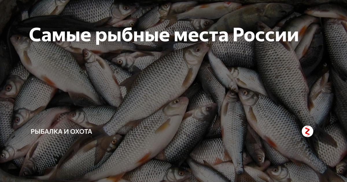 Видеокарта уловистых мест россии сезон 7-й на канале охотник и рыболов в 14:55 1.04.2020, кадры, видео, актеры.