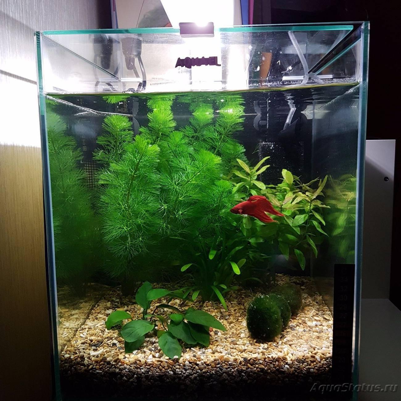 Настенный аквариум: морское царство в нашем доме
