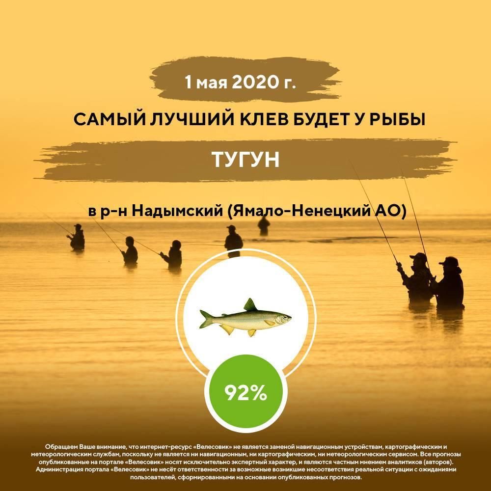 Лучшие водоемы для рыбалки в россии, где точно клюет рыба