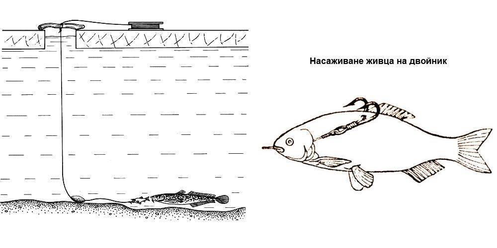 Перемет на сома, щуку, налима, судака и техника ловли снастью | berlogakarelia.ru