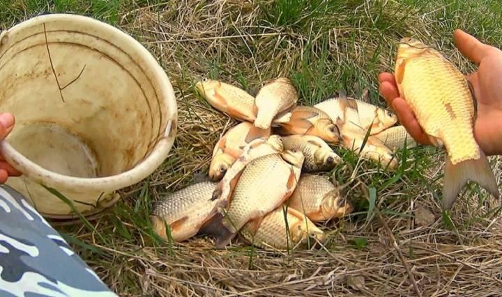 Секреты ловли рыбы на картофель