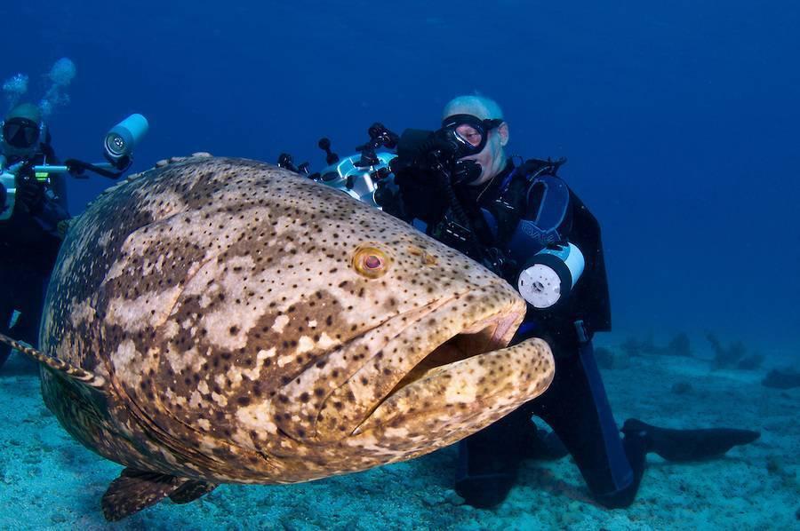 Рыбы (группа животных): представители с фото и описаниями