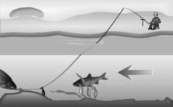 Лев лурье — о рыбе с петербургским вкусом