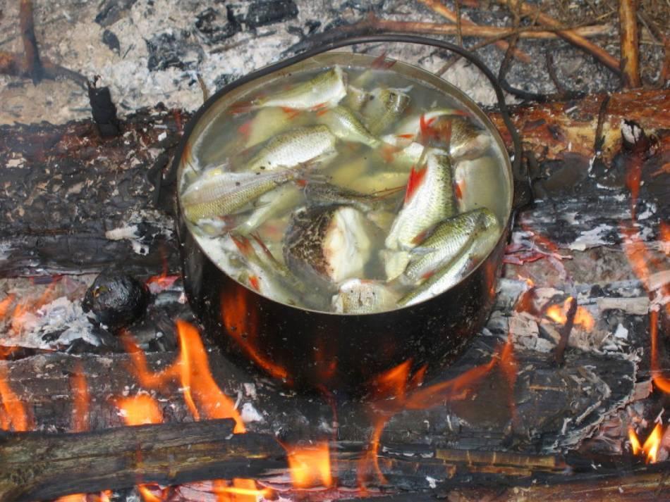 """Вкусная уха из речной рыбы: проверенный рыбаками рецепт — журнал """"рутвет"""""""