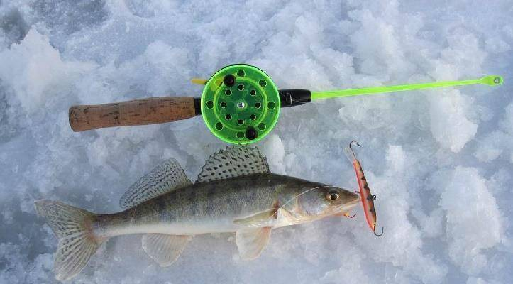 Ловля судака на ратлины зимой, снасти, проводка, тактика + видео