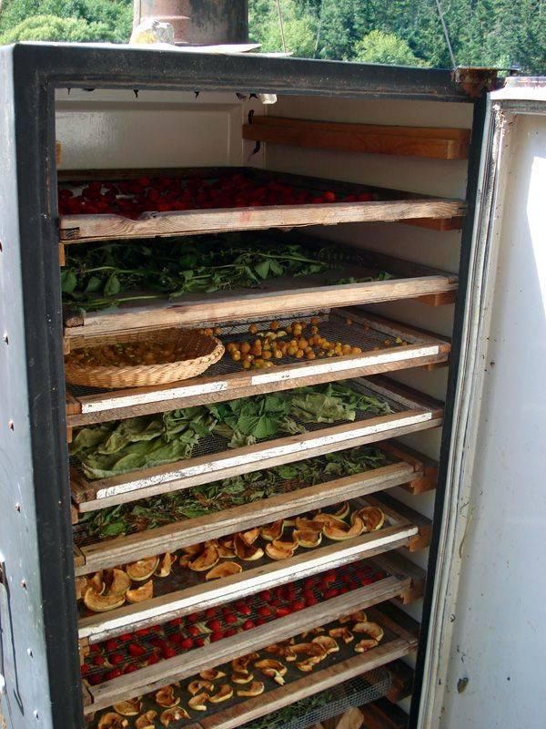 Сушилка для овощей и фруктов своими руками: выбор материалов, чертеж конструкции