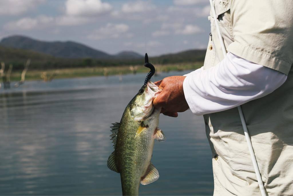 Рыбалка на яузском водохранилище: описание местных видов рыб, обзор баз пудыши и других мест отдыха