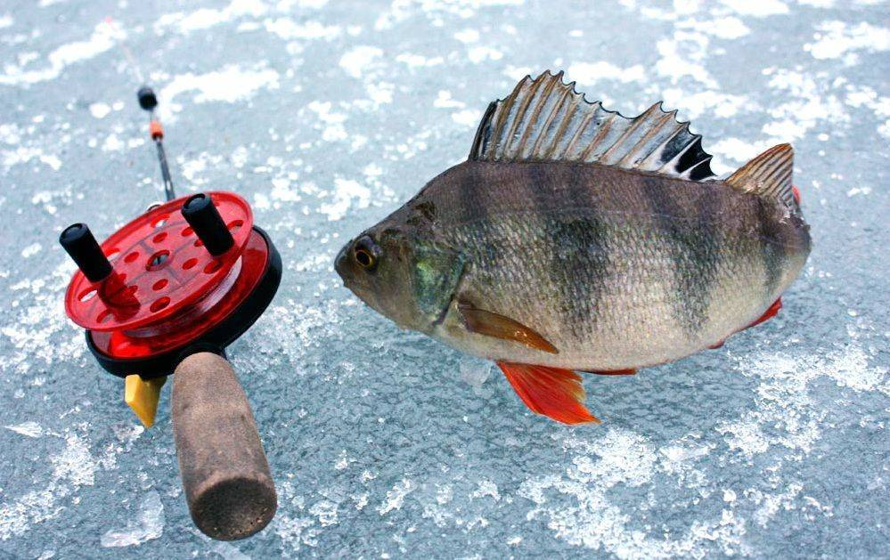 Как ловить окуня зимой: подбираем приманки, готовим снасти