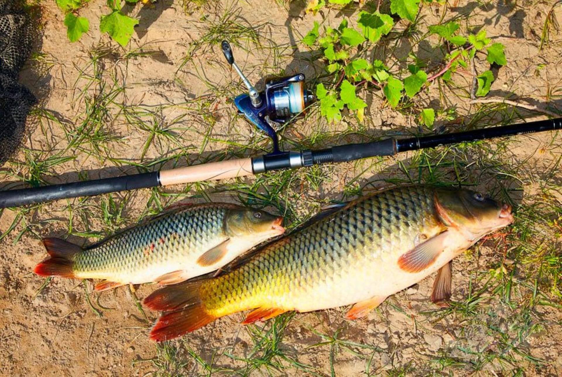 Рыбалка маховой удочкой, тактика и техника ловли, оснастка + видео